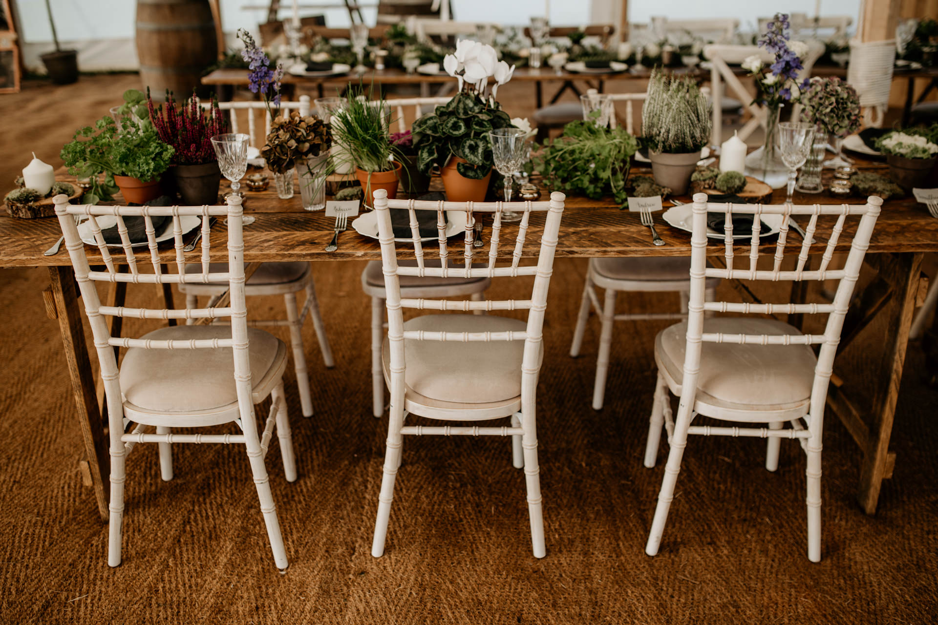 Chiavari chairs in a marquee